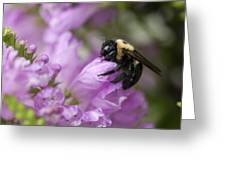 Bee Hug Greeting Card
