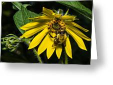 Bee In A Wild Flower Greeting Card