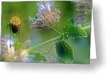 Bee In Catmint Greeting Card