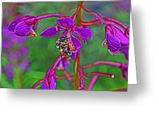 Bee In Hdr Greeting Card