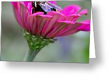 Bee In Pink Flower Greeting Card