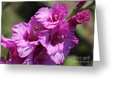 Bee In Pink Gladiolus Greeting Card