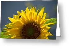 Bee In Sunflower Greeting Card