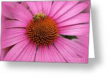 Bee In The Pink Greeting Card