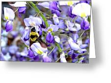 Bee In The Wisteria Greeting Card