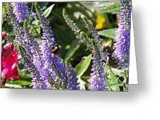Bee Lavendar Greeting Card