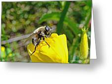 Bee Mimic On Primrose Greeting Card