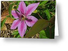 Bee My Clematis Greeting Card