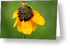 Bee My Coneflower Greeting Card