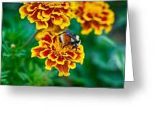 Bee My Friend Miss Marigold Greeting Card