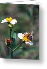 Bee- Nectar Greeting Card