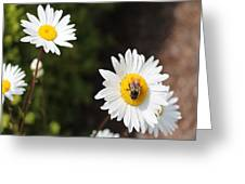 Bee On A Daisy 2 Greeting Card