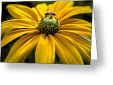 Bee On A Daisy Greeting Card