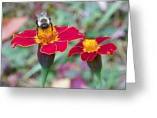 Bee On A Marigold 2 Greeting Card