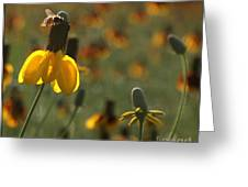 Bee On A Mexican Hat  Greeting Card