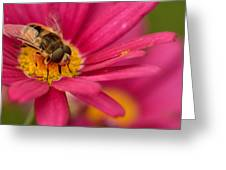 Bee On A Pink Daisy Greeting Card