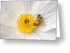 Bee On A Poppy Greeting Card