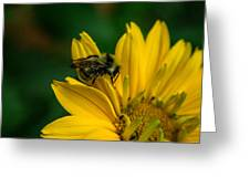 Bee On A Quest Greeting Card