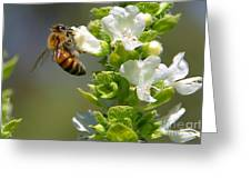 Bee On Basil Greeting Card