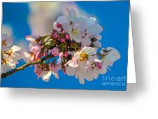 Bee On Blossom Greeting Card