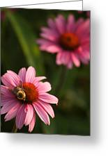 Bee On Coneflower Greeting Card