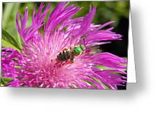Bee On Corn Flower Greeting Card