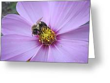 Bee On Cosmos Greeting Card