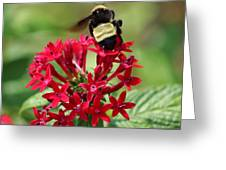 Bee On Flower Cluster Greeting Card