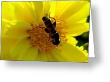 Honey Bee On Sunflower Greeting Card