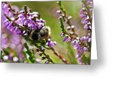 Bee On Heather Greeting Card