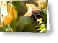 Bee On Leaf Greeting Card