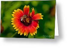 Bee On Orange Flower Greeting Card