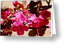 Bee On Pink Blossoms 031015aa Greeting Card