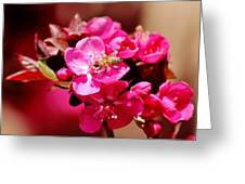 Bee On Pink Blossoms 031015ab Greeting Card