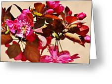 Bee On Pink Blossoms 031015ac Greeting Card