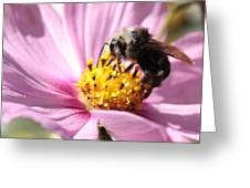 Bee On Pink Cosmos Greeting Card