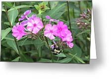 Bee On Pink Phlox Greeting Card