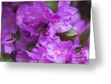 Bee On Rhododendrons Greeting Card