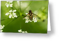 Bee On Top Of The Flower - Featured 3 Greeting Card