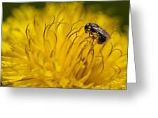 Bee Pollen Greeting Card