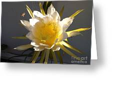 Bee Pollinating Dragon Fruit Blossom Greeting Card