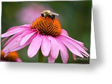 Bee Resting On Cone Flower Greeting Card