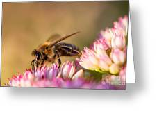 Bee Sitting On Flower Greeting Card