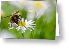Bee The Daisy Greeting Card