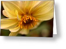 Bee Trap Greeting Card