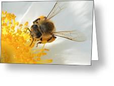 Bee-u-tiful Squared Greeting Card
