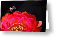 Bee Uti Full Greeting Card