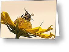Bee Utiful Day Greeting Card