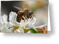 Bee4honey Greeting Card