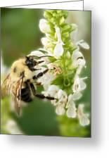 'bee'autiful Morning Greeting Card